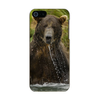 Brown bear, male, fishing for salmon incipio feather® shine iPhone 5 case