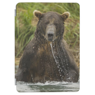 Brown bear, male, fishing for salmon iPad air cover