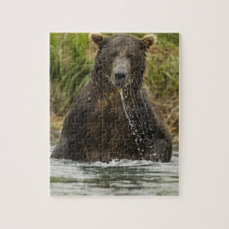 Brown bear, male, fishing for salmon jigsaw puzzle