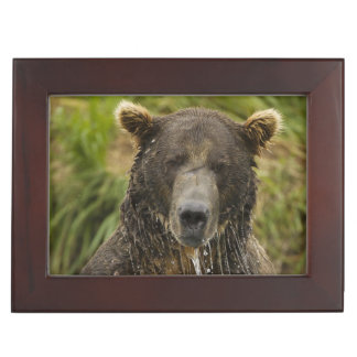 Brown bear, male, fishing for salmon keepsake box