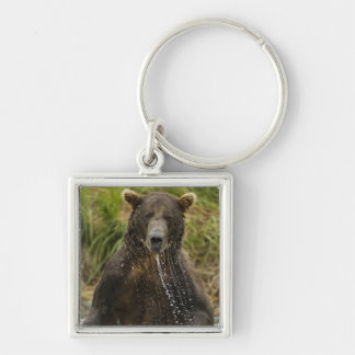 Brown bear, male, fishing for salmon key ring