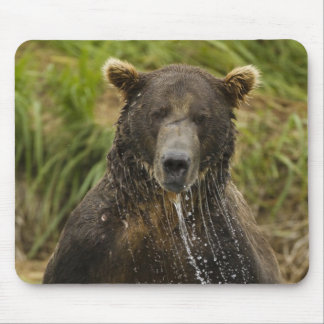 Brown bear, male, fishing for salmon mouse mat