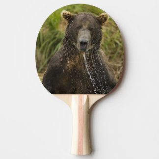 Brown bear, male, fishing for salmon ping pong paddle