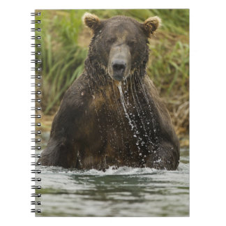 Brown bear, male, fishing for salmon spiral notebook