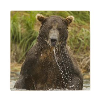 Brown bear, male, fishing for salmon wood coaster