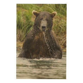 Brown bear, male, fishing for salmon wood wall art