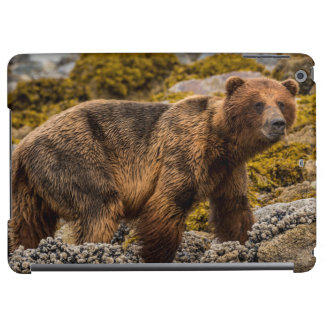 Brown bear on beach