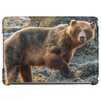 Brown bear on beach 2