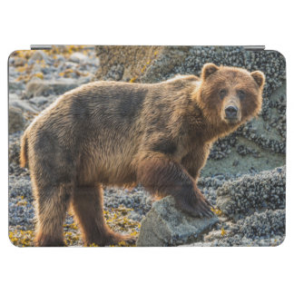 Brown bear on beach 2 iPad air cover