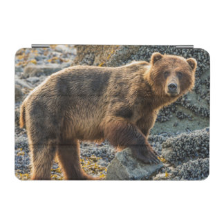 Brown bear on beach 2 iPad mini cover