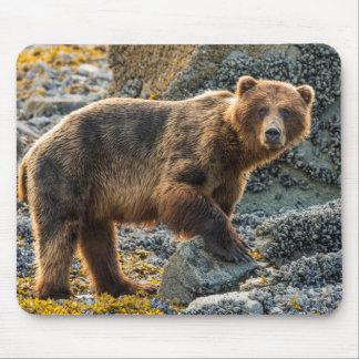 Brown bear on beach 2 mouse mat