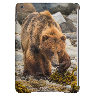 Brown bear on beach 3