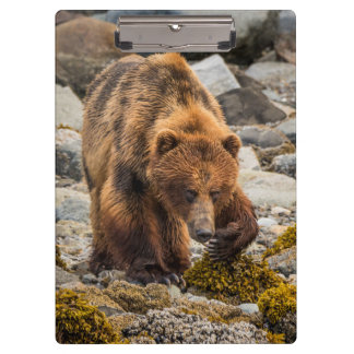 Brown bear on beach 3 clipboard