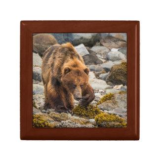Brown bear on beach 3 gift box