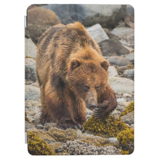 Brown bear on beach 3 iPad air cover