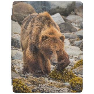 Brown bear on beach 3 iPad cover