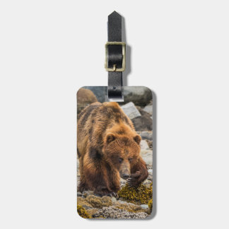 Brown bear on beach 3 luggage tag