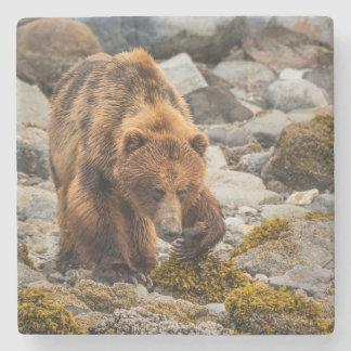 Brown bear on beach 3 stone coaster
