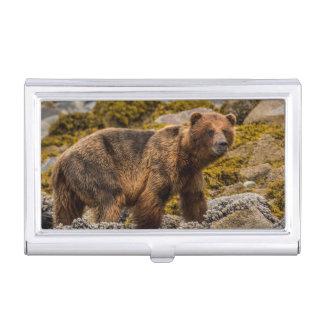 Brown bear on beach business card holder