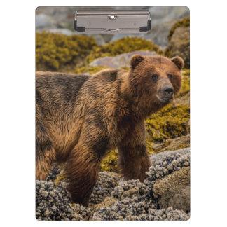 Brown bear on beach clipboard