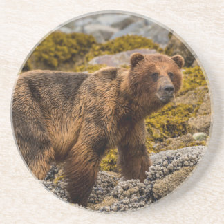 Brown bear on beach coasters