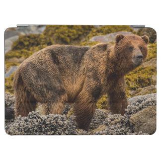 Brown bear on beach iPad air cover