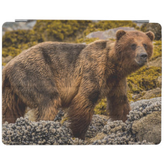 Brown bear on beach iPad cover