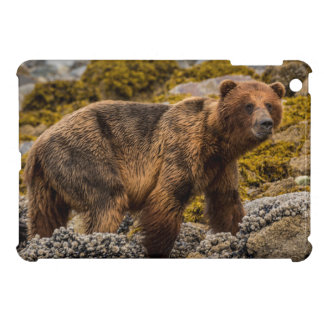 Brown bear on beach iPad mini case