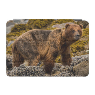 Brown bear on beach iPad mini cover