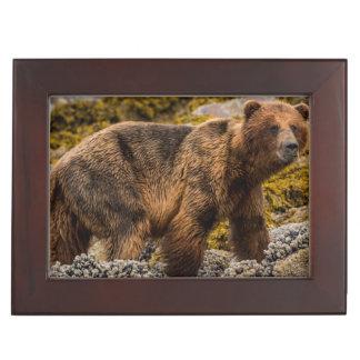 Brown bear on beach keepsake box
