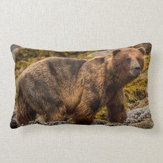 Brown bear on beach lumbar cushion