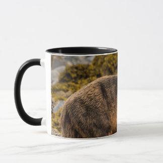Brown bear on beach mug
