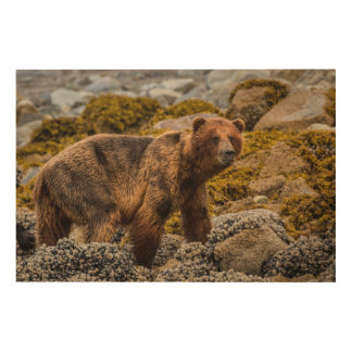 Brown bear on beach wood wall art