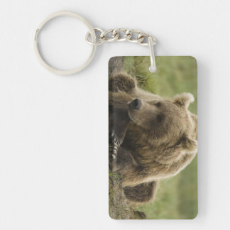 Brown bear, or Coastal Grizzly Bear, Ursus Double-Sided Rectangular Acrylic Key Ring