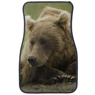 Brown bear, or Coastal Grizzly Bear, Ursus Floor Mat