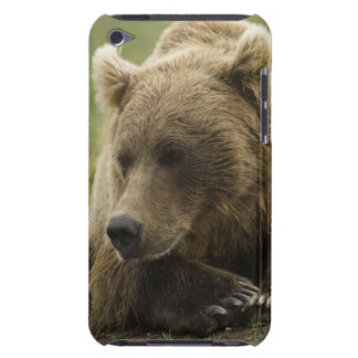 Brown bear, or Coastal Grizzly Bear, Ursus iPod Touch Cover