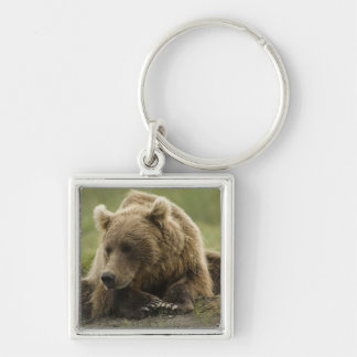 Brown bear, or Coastal Grizzly Bear, Ursus Keychains