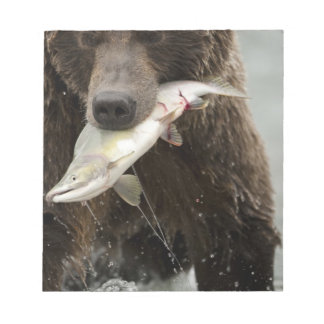 Brown bear, or Coastal Grizzly Bear, Ursus Notepad