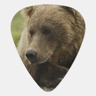 Brown bear, or Coastal Grizzly Bear, Ursus Plectrum