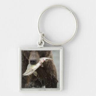 Brown bear, or Coastal Grizzly Bear, Ursus Silver-Colored Square Key Ring