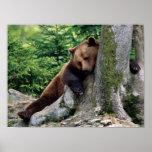 Brown Bear Rest Stop Print