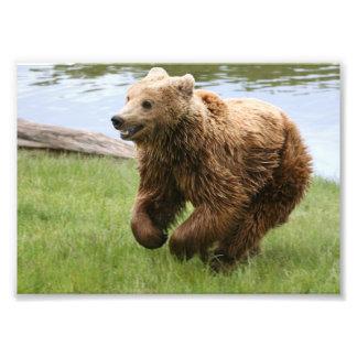Brown Bear Running Photograph
