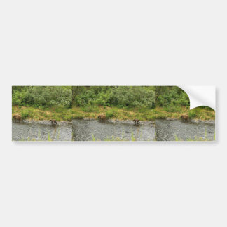 Brown bear sow and cub at river's edge bumper sticker