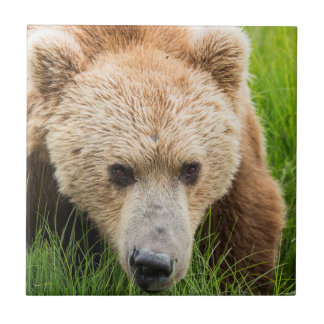 Brown Bear Tile