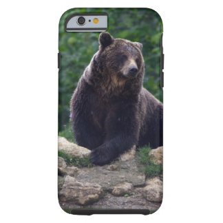 Brown bear tough iPhone 6 case
