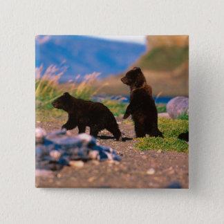 Brown Bear, Ursus arctos, Alaska Peninsula, 15 Cm Square Badge