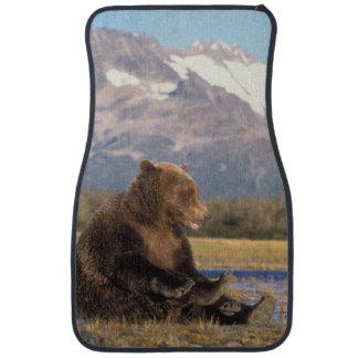 brown bear, Ursus arctos, grizzly bear, Ursus 2 Car Mat