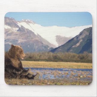 brown bear, Ursus arctos, grizzly bear, Ursus 2 Mouse Pads