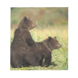 brown bear, Ursus arctos, grizzly bear, Ursus 2 Notepad