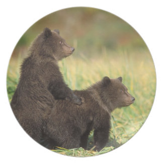 brown bear, Ursus arctos, grizzly bear, Ursus 2 Plate